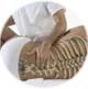 Мануальная терапия при искревлении позвоночника